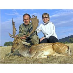 4-Day European Fallow Deer Hunt for Two Hunters in Spain - Includes Trophy Fees