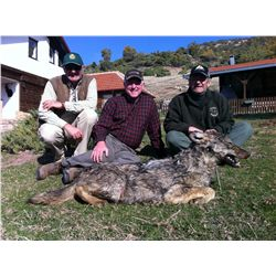 7-Day Wolf Hunt for One Hunter and One Non-Hunter in Macedonia - Includes Trophy Fee