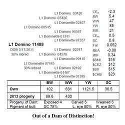 L1 Domino 11488