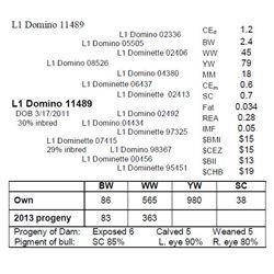 L1 Domino 11489