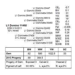L1 Domino 11492