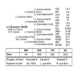 L1 DOMINO 12430