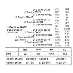 L1 DOMINO 12457