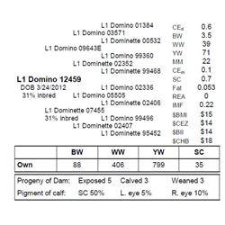 L1 DOMINO 12459