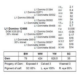 L1 DOMINO 12466