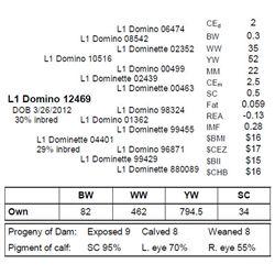 L1 DOMINO 12469