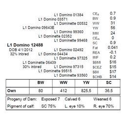 L1 DOMINO 12488