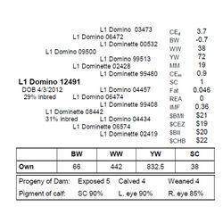 L1 DOMINO 12491