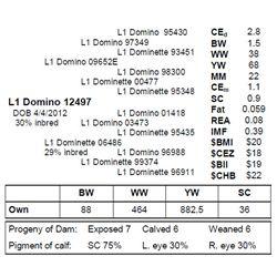 L1 DOMINO 12497