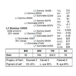L1 DOMINO 12503