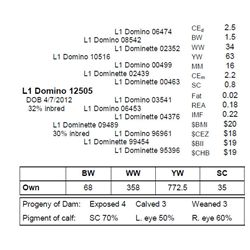 L1 DOMINO 12505