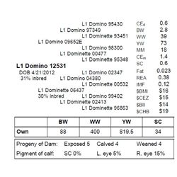 L1 DOMINO 12531