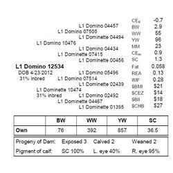 L1 DOMINO 12534