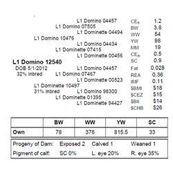 L1 DOMINO 12540