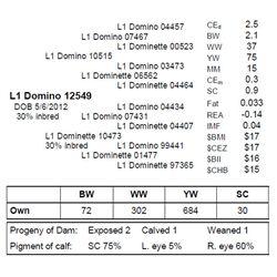 L1 Domino 12549