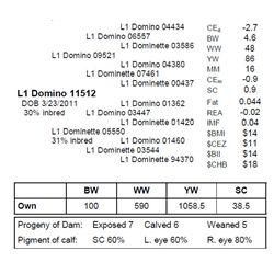 L1 Domino 11512
