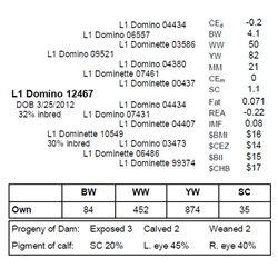 L1 Domino 12467