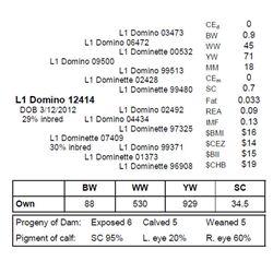L1 Domino 12414