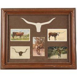 (5) Antique Postcards of Texas Longhorns