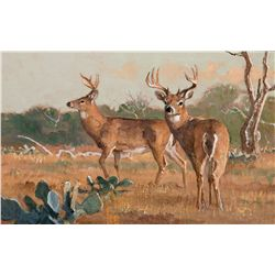 South Texas Gold-Whitetails by Kuhn, Bob