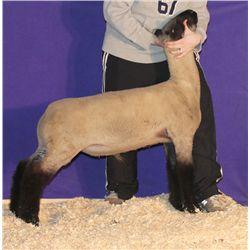 Beatty Club Lambs - Wether