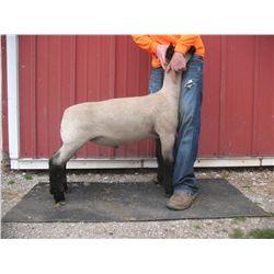 Johnson/Gump Club Lambs - Wether