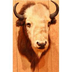 Beefalo neck mount, cross between buffalo
