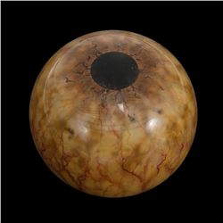 Jurassic Park - Brachiosaurus Eye