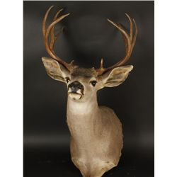 Buck Mount with 5x5