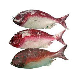 Jaws 2 Fish Props