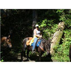 Reba- 12 yr old black molly mule