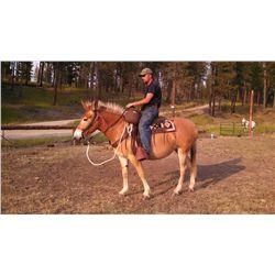 "Sunny- 9 yrs. Blonde sorrel, molly mule,14H2"","