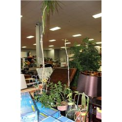 5 INDOOR PLANTS