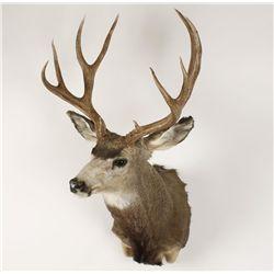 Buck Mount