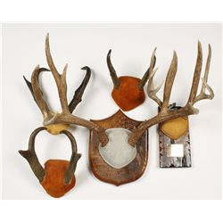 Lot of Antlers and Horns