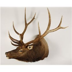 Bull Elk Mount