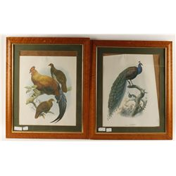 Lot of Three Repro Prints of Birds Matted & Framed