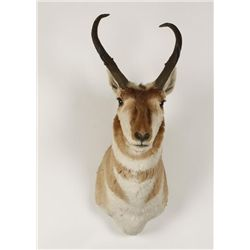 Pronghorn Mount
