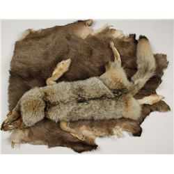 Coyote and Buck Deer Pelt