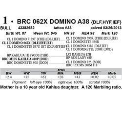 Lot 1 - BRC 062X DOMINO A38 {DLF,HYF,IEF}