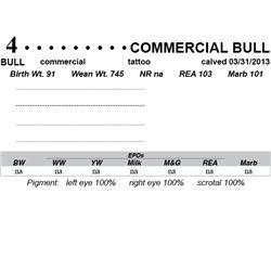Lot 4 - Commercial Bull