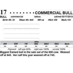 Lot 17 - Commercial Bull