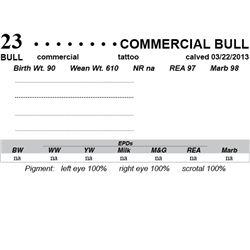 Lot 23 - Commercial Bull