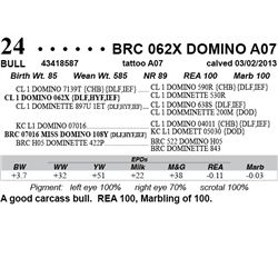 Lot 24 - BRC 062X DOMINO A07