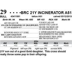 Lot 29 - BRC 21Y INCINERATOR A51