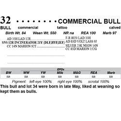 Lot 32 - Commercial Bull