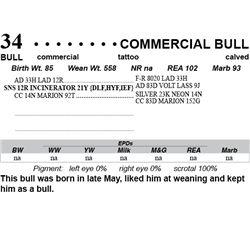 Lot 34 - Commercial Bull