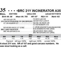 Lot 35 - BRC 21Y INCINERATOR A35