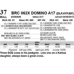 Lot 37 - BRC 062X DOMINO A17 {DLF,HYF,IEF}