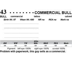 Lot 43 - Commercial Bull